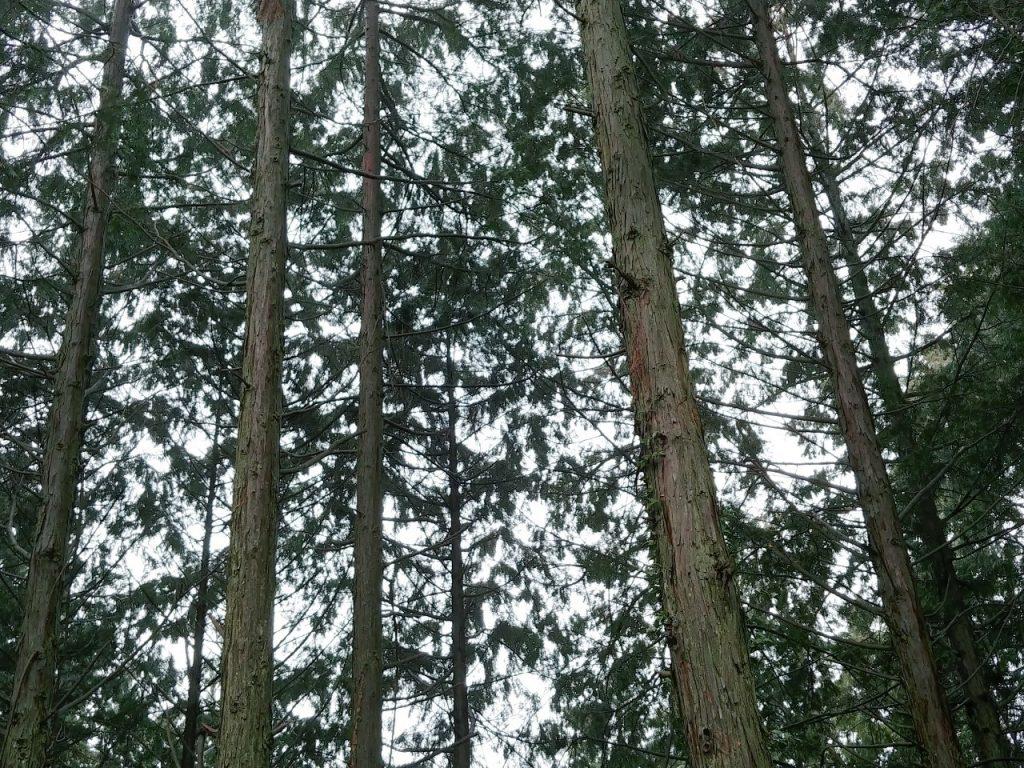 連携のバトンを2020年へ~2020年の森の管理・育成2019~